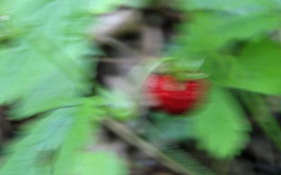 Frutta & Verdura