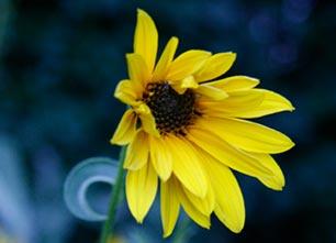 Flore : Pêle-Mêle